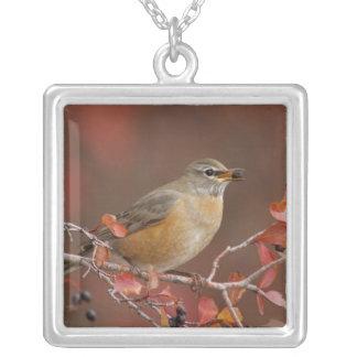 Female American Robin in Black Hawthorn Square Pendant Necklace