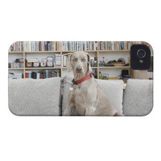 Female animal iPhone 4 cover