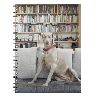 Female animal notebook