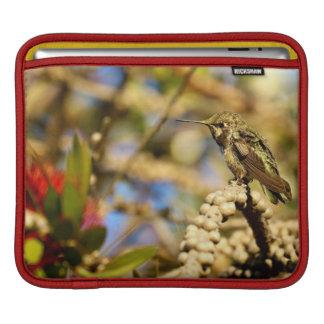 Female Anna's Hummingbird, California, Photo iPad Sleeve