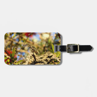 Female Anna's Hummingbird, California, Photo Luggage Tag