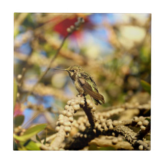Female Anna's Hummingbird, California, Photo Tile