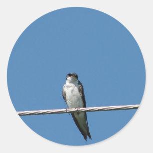 Female Barn Swallow Classic Round Sticker