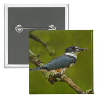 Female Belted Kingfisher with prey near nest 2 Inch Square Button