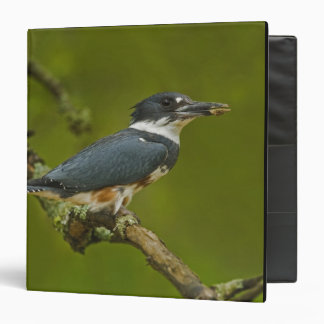 Female Belted Kingfisher with prey near nest Binder