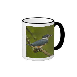 Female Belted Kingfisher with prey near nest Ringer Coffee Mug