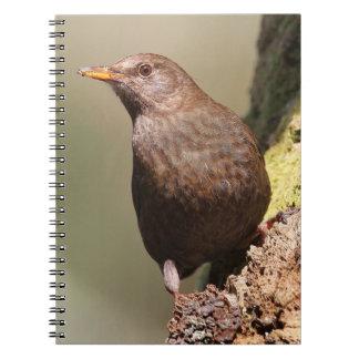 Female Blackbird Notebook