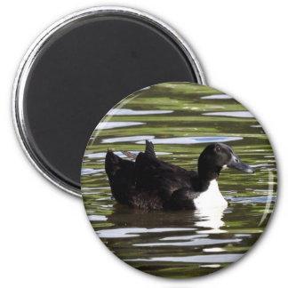 Female Blue Swedish Duck 2 Inch Round Magnet