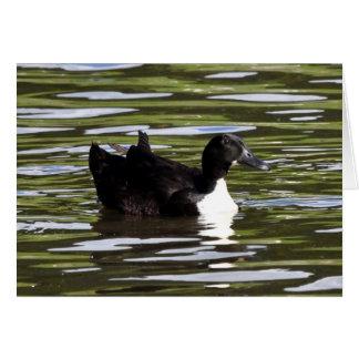 Female Blue Swedish Duck Card