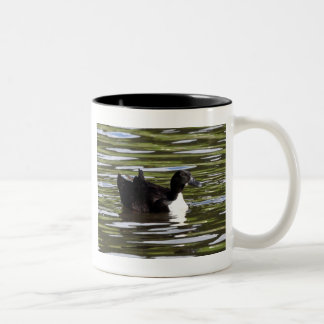 Female Blue Swedish Duck Coffee Mugs