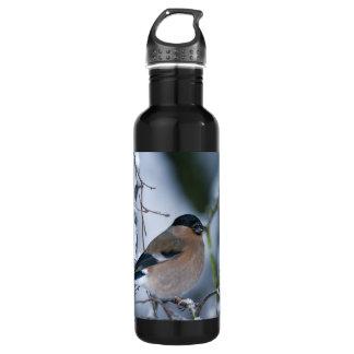 Female Bullfinch 24oz Water Bottle