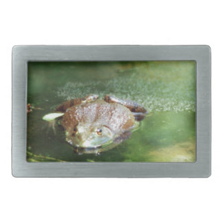Female Bullfrog Laying Eggs Belt Buckle