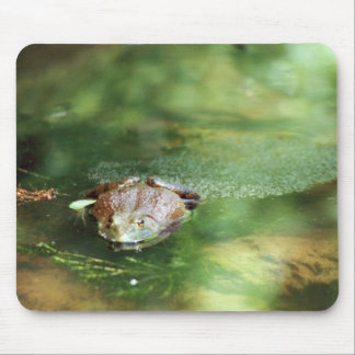 Female Bullfrog Laying Eggs Mouse Pad