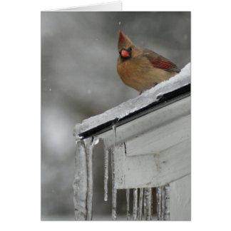 Female Cardinal Cards