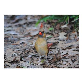 Female Cardinal 1 Card