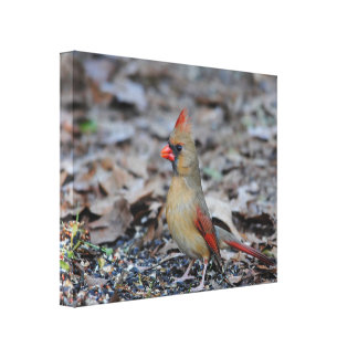 Female Cardinal 2 Canvas Print