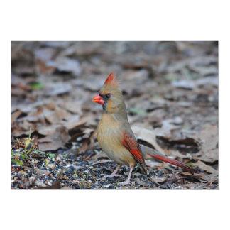 Female Cardinal 2 Card