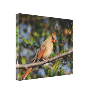 Female Cardinal 3 Canvas Print