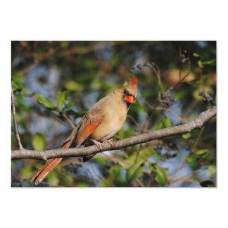 Female Cardinal 3 Card