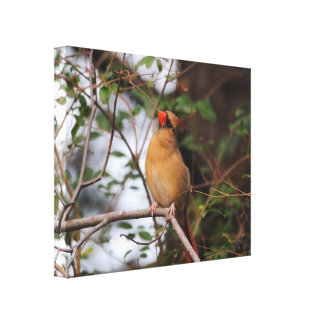 Female Cardinal 5 Canvas Print