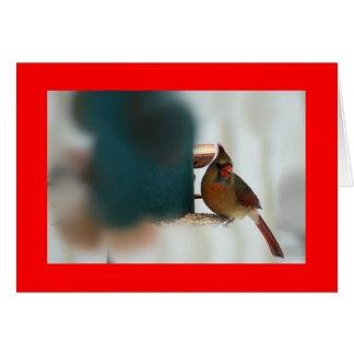Female Cardinal at Birdfeeder Card