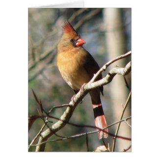 Female Cardinal Card