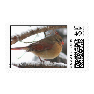 female cardinal stamp