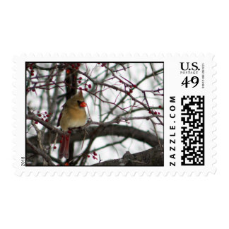 Female Cardinal Stamp
