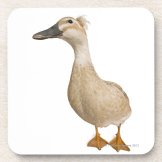 Female Crested Duck, 3 years old Beverage Coaster