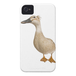 Female Crested Duck, 3 years old iPhone 4 Cover