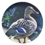 Female Duck Keeping an Eye on You Dinner Plate