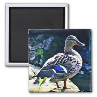 Female Duck Keeping an Eye on You 2 Inch Square Magnet