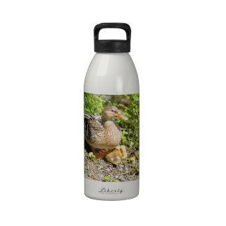 Female duck with its ducklings on ground water bottle