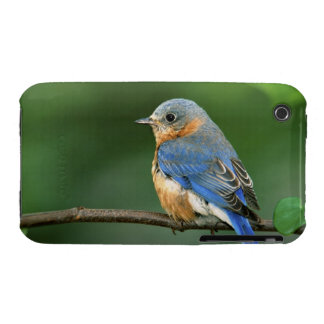 Female Eastern Bluebird, Sialia sialis Case-Mate iPhone 3 Case