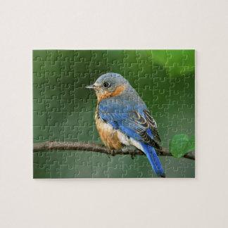 Female Eastern Bluebird, Sialia sialis Jigsaw Puzzle