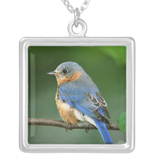 Female Eastern Bluebird, Sialia sialis Silver Plated Necklace