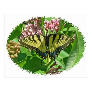 Female Eastern Tiger Swallowtail Butterfly Series Postcard