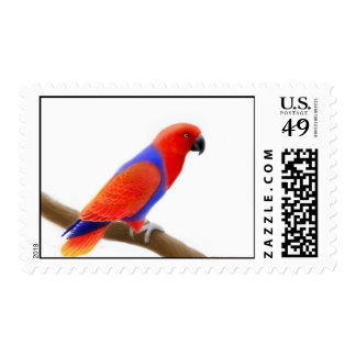 Female Eclectus Parrot Postage Stamps