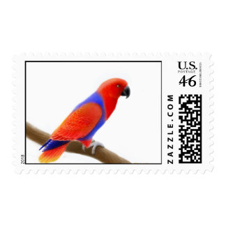 Female Eclectus Parrot Stamps