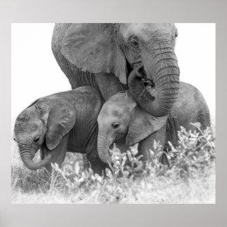 Female Elephant Re-Assuring Two Calves (Samburu) Poster