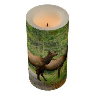Female Elk 3x6 LED Candle