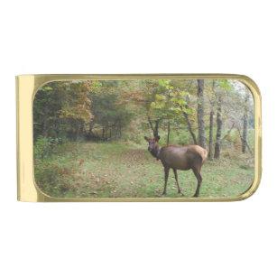 Female Elk in autumn field Gold Finish Money Clip