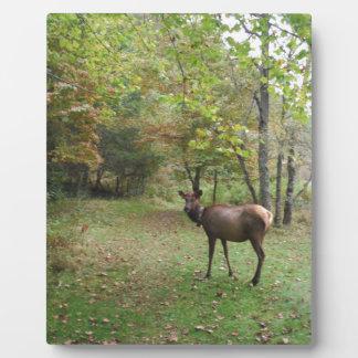 Female Elk in autumn field Plaques