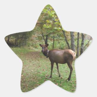 Female Elk in autumn field Star Sticker