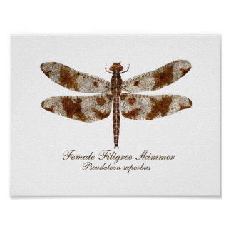 Female Filigree Skimmer daronfly Poster