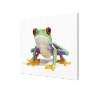 Female frog 2 canvas print
