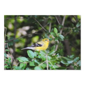 Female Goldfinch 2 Card