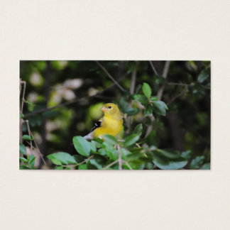 Female Goldfinch Business Card
