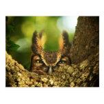 Female Great Horned Owl Post Cards
