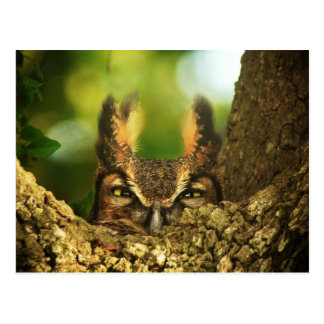 Female Great Horned Owl Postcard